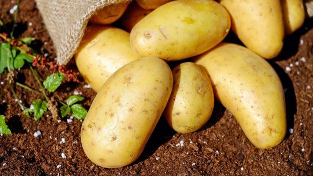 3 tipy, jak uvařit brambory jako šéfkuchař (+ typy brambor)