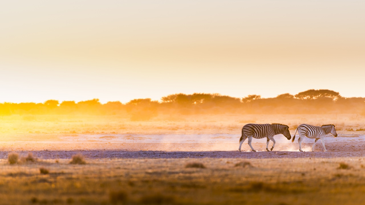 Dovolená Botswana | © THPStock | Dreamstime.com