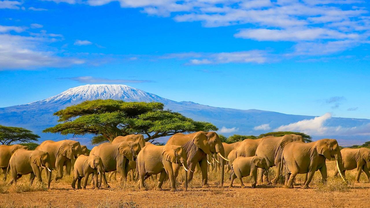 Dovolená Keňa   © Paul Hampton   Dreamstime.com