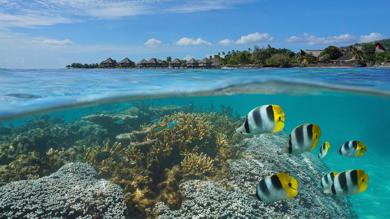 Dovolená Tahiti   © Seadam   Dreamstime.com