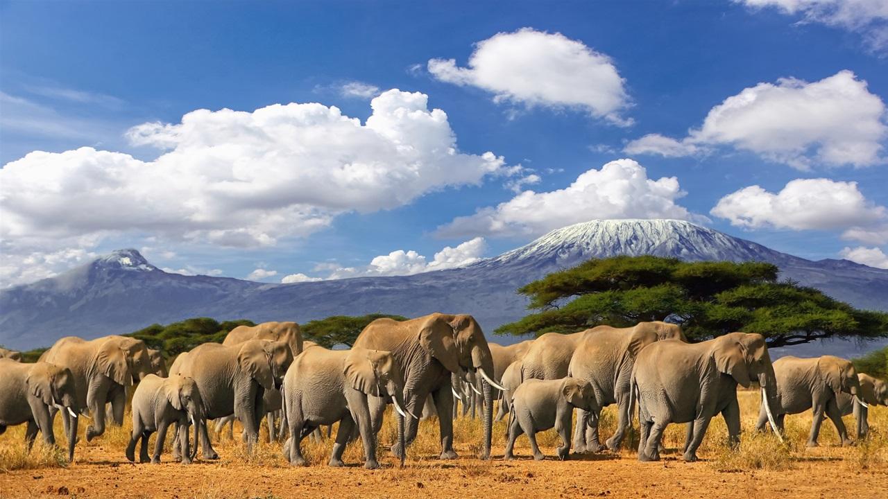 Dovolená Tanzánie | © Paul Hampton | Dreamstime.com