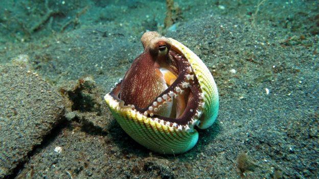 Jak chovat chobotnici