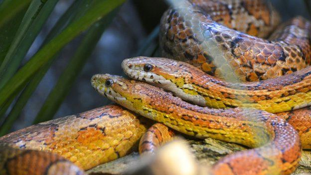 Jak chovat hada