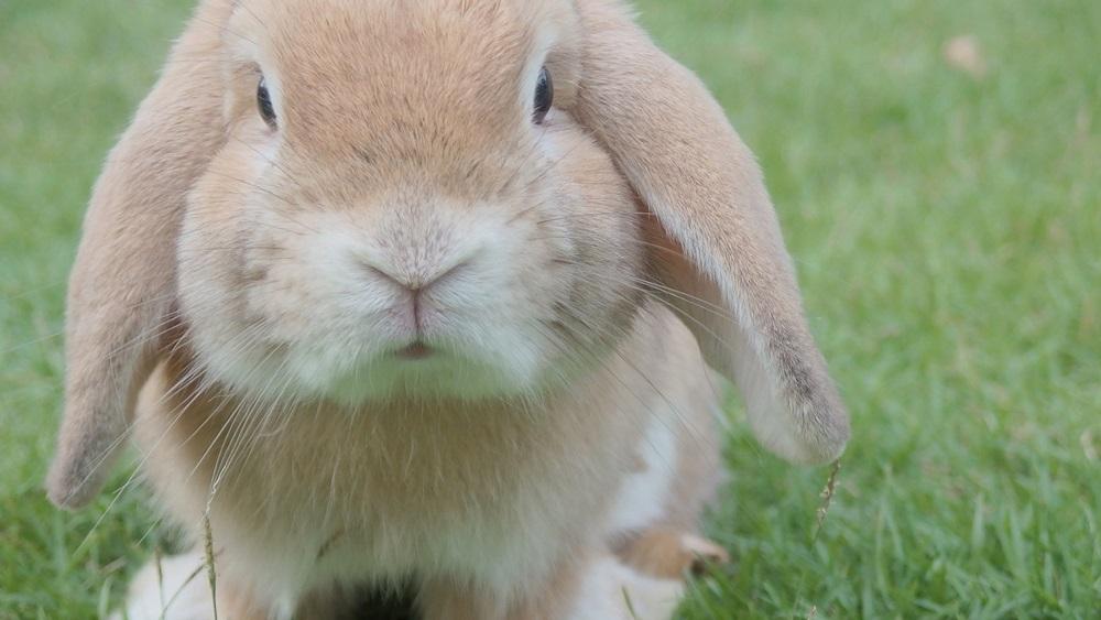 Jak chovat králíka