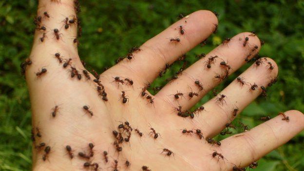 Jak chovat mravence