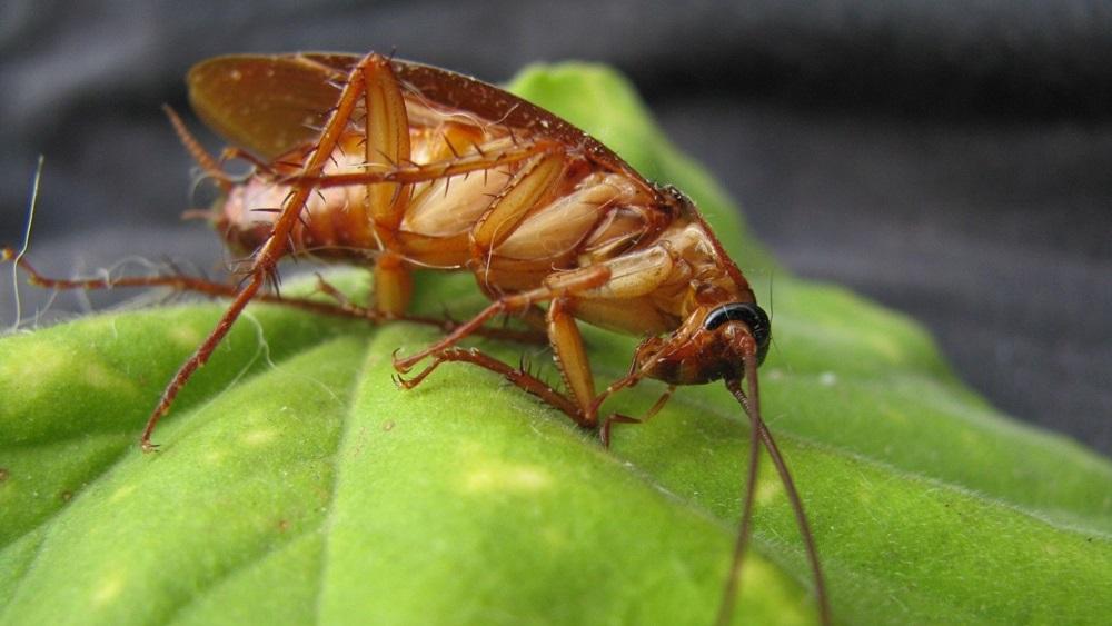 Jak chovat šváby