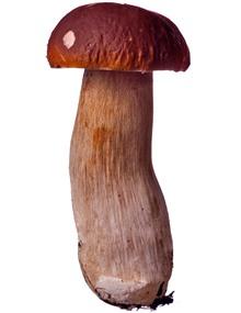 Jak čistit houby