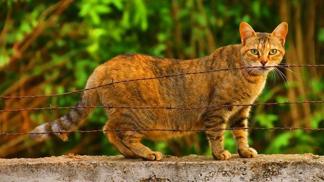 Jak dlouho je kočka březí
