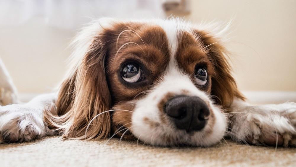 Jak krmit štěně