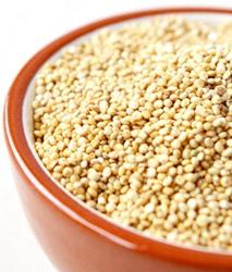 Jak naklíčit quinou