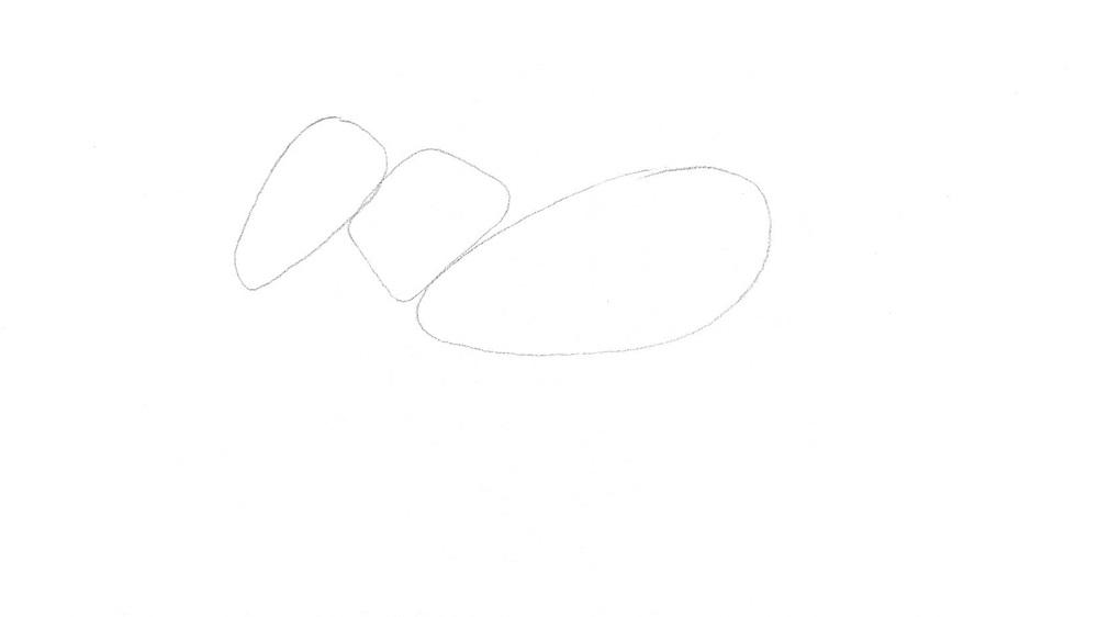 Jak nakreslit zebru