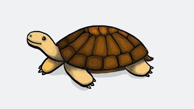 Jak nakreslit želvu