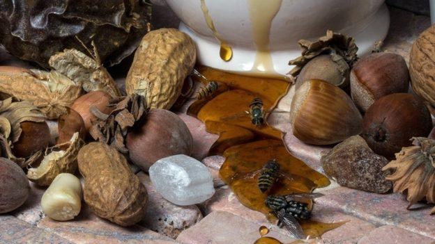 Jak naložit ořechy do medu