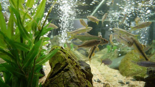 Jak opravit akvárium