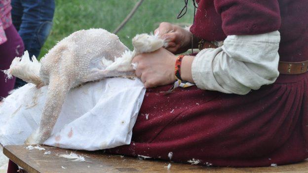 Jak oškubat kachnu
