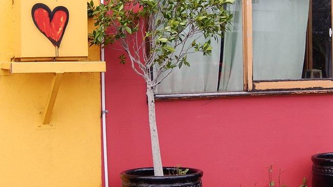 Jak pěstovat fíkus | © Michael Coghlan / Flickr.com