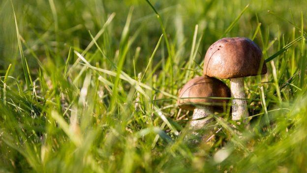 Jak pěstovat houby