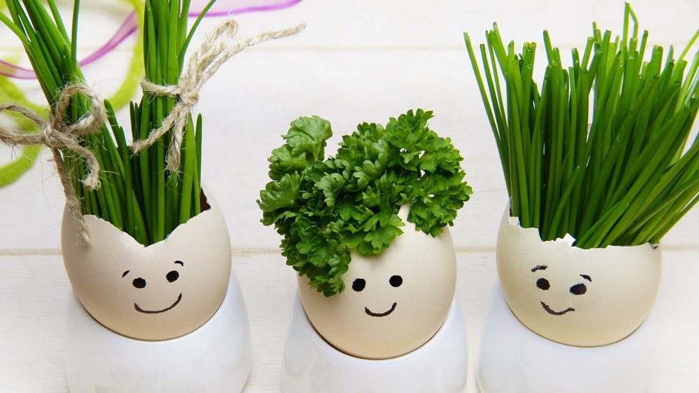 Jak pěstovat pažitku