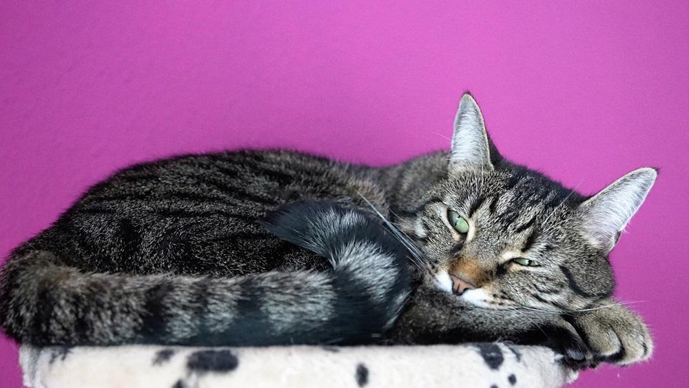 Jak poznat, že kočka umírá