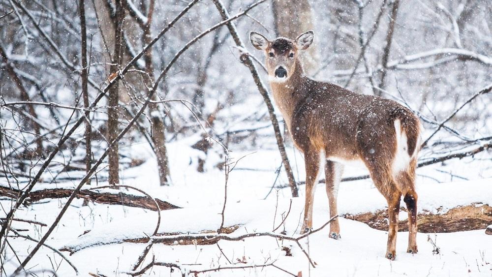 Jak přezimují lesní zvířata