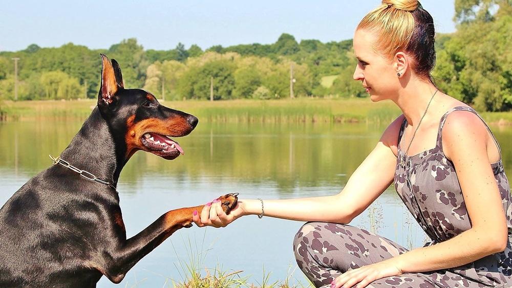 Jak psa naučit pac