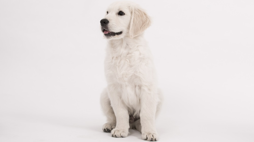 Jak psa naučit sedni