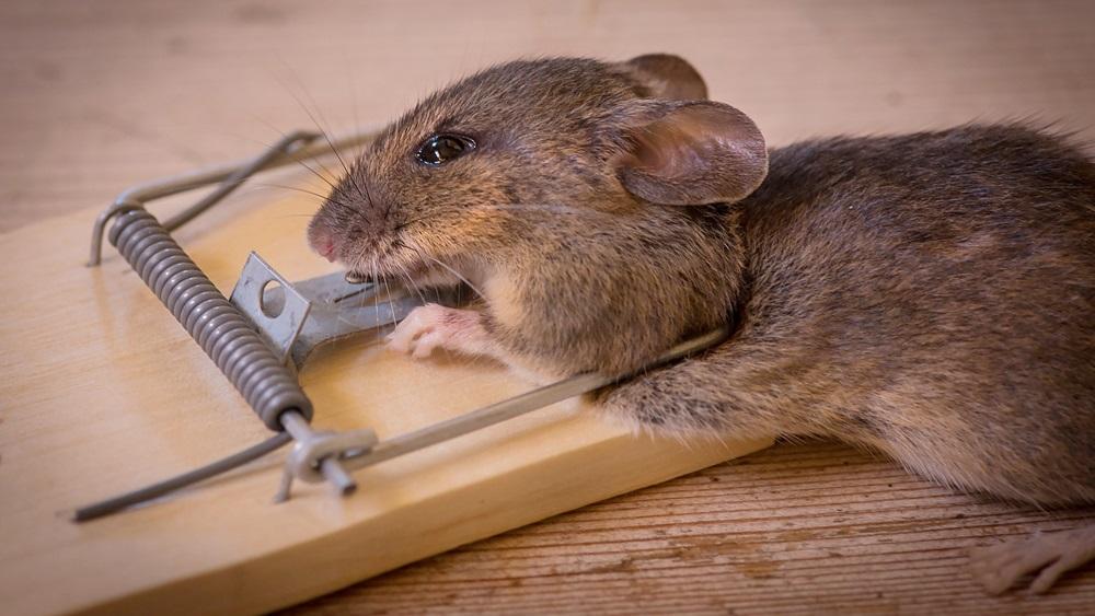 Jak rychle chytit myš