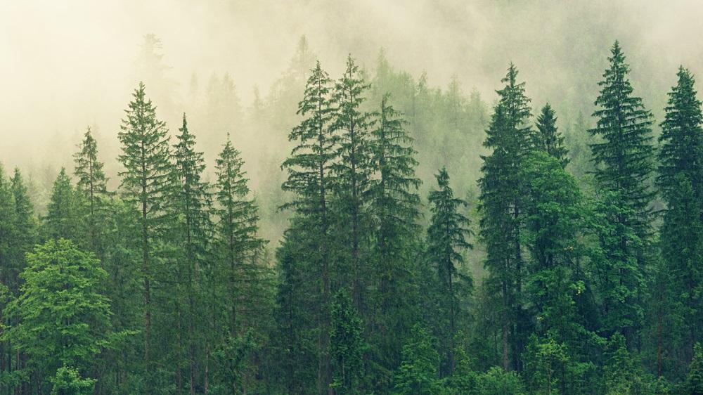Jak se správně chovat v lese