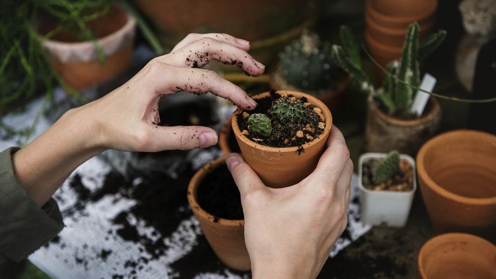 Jak se správně starat o kaktus