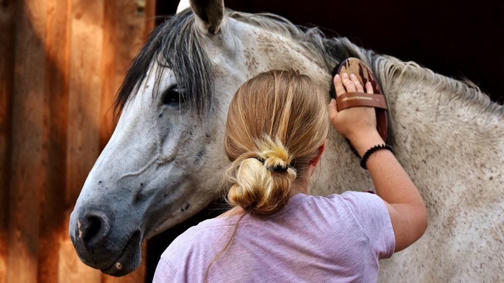 Jak se správně starat o koně