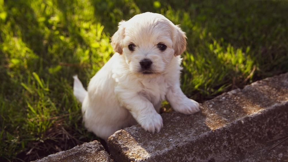 Jak se správně starat o štěně