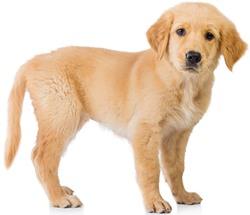 Jak vyčistit koberec od psí moči