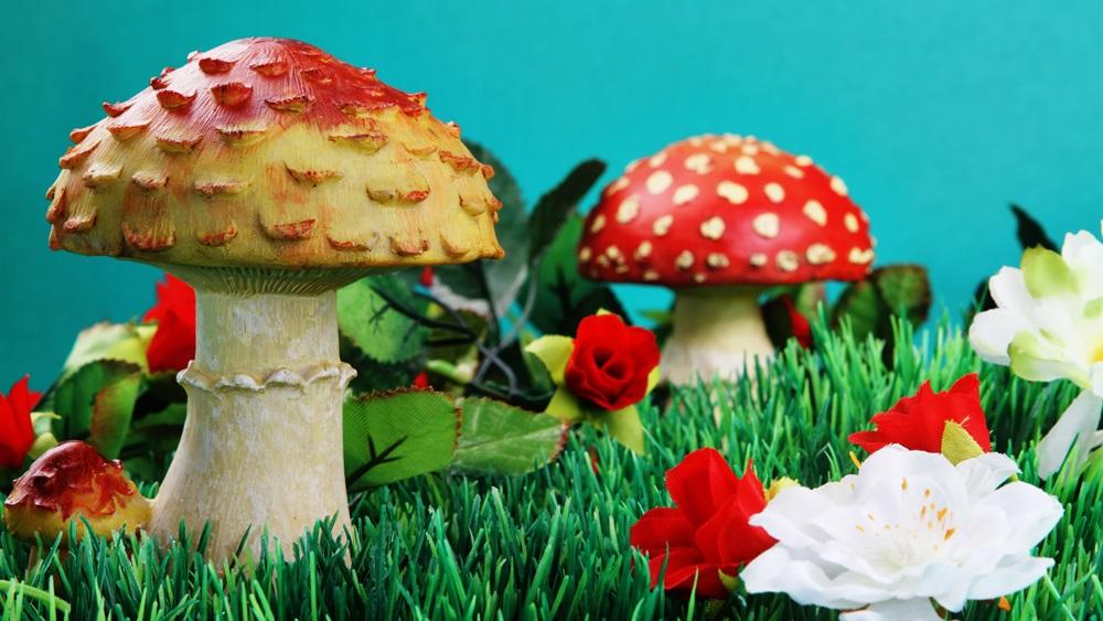 Jak vyrobit houbu