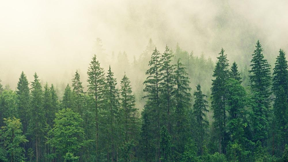 Jak vysadit les