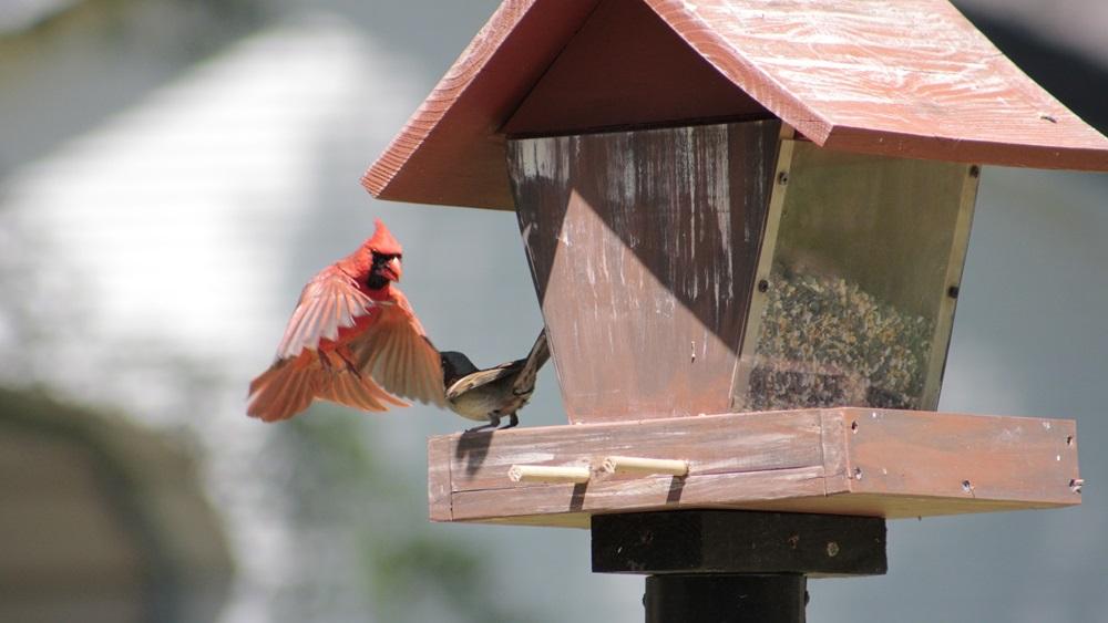 Jak vytvořit ptačí budku