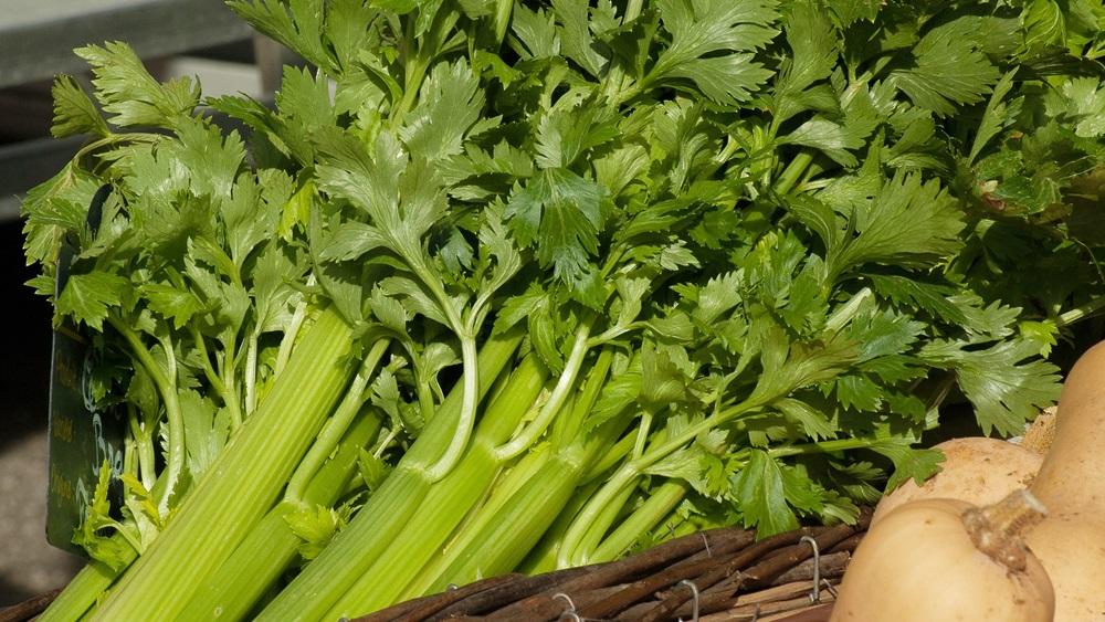 Jak využít celerovou nať