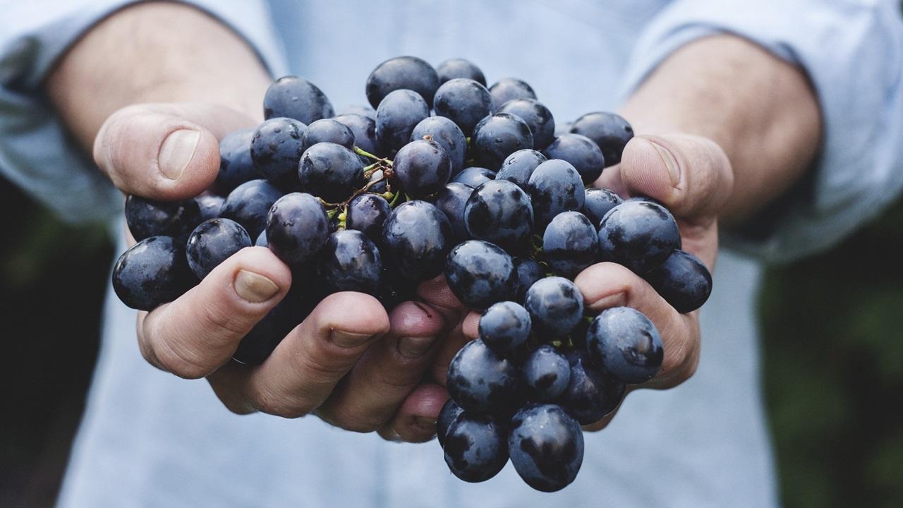 Jak využít hroznové víno