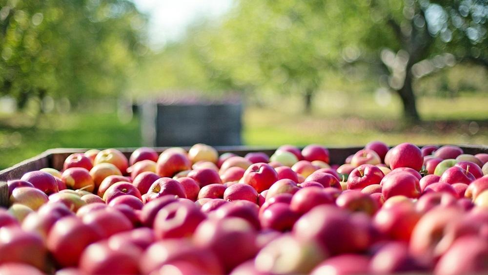 Jak využít jablka