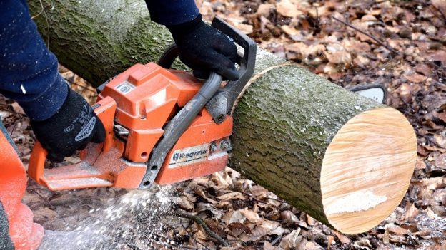 Jak využít kmen stromu