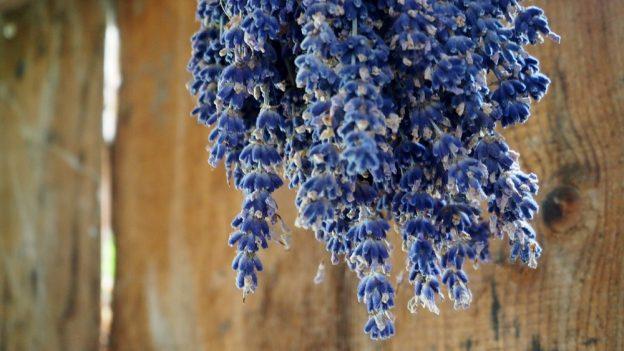Jak využít sušenou levanduli