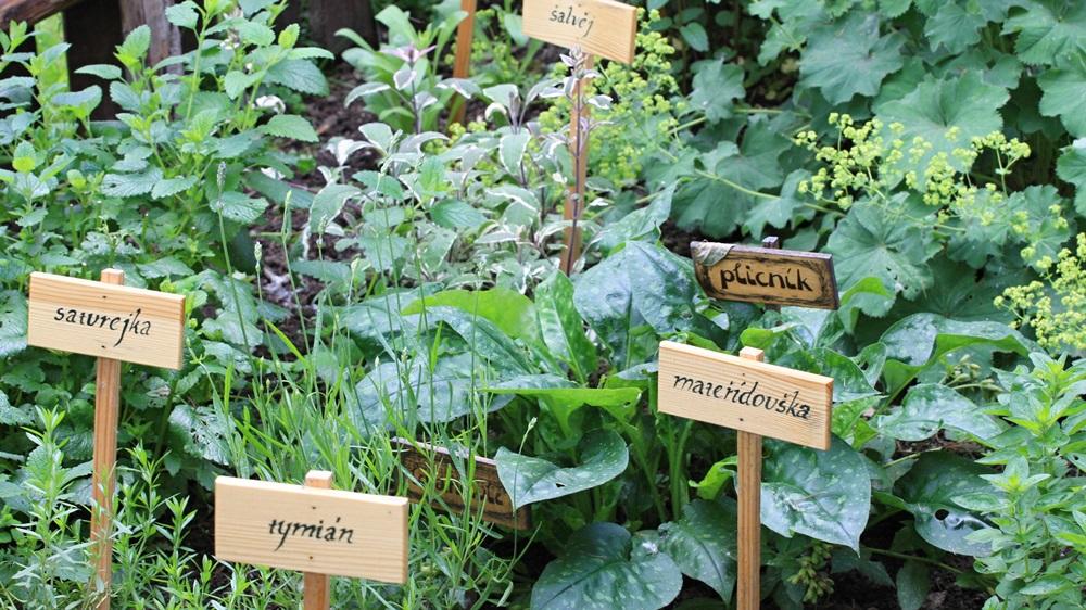 Jak založit bylinkovou zahrádku