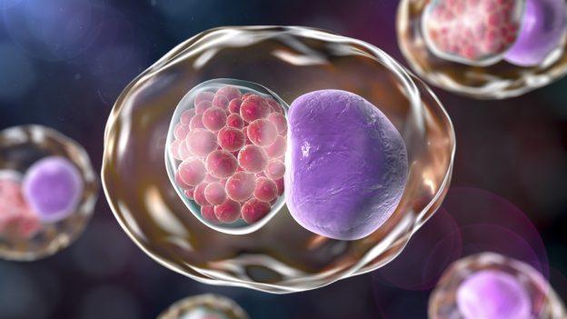 Jak zjistit chlamydie