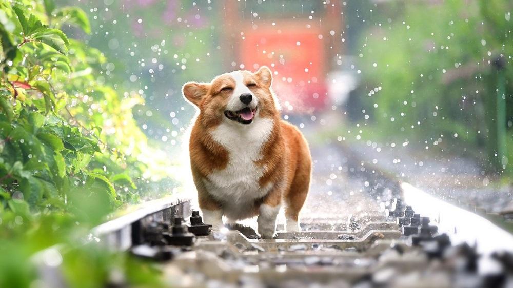 Kdy se čipuje pes