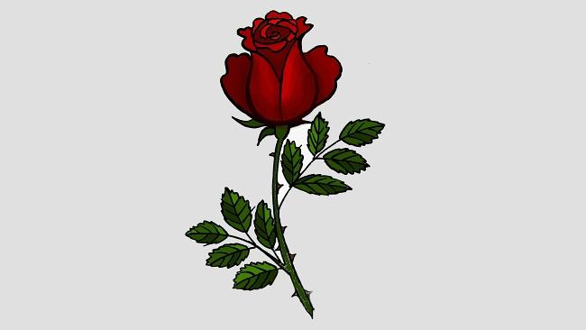 Jak nakreslit růži