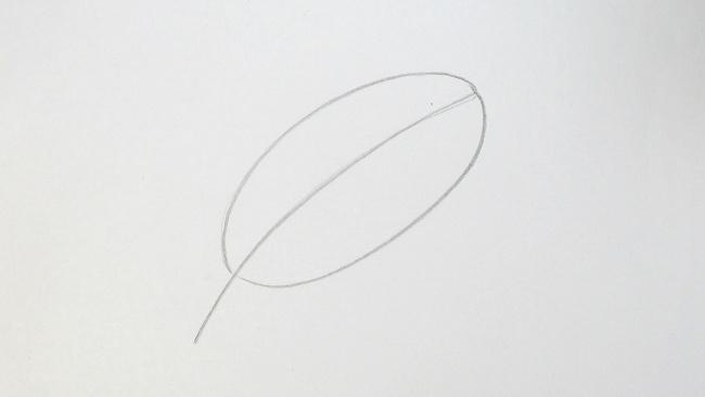 Jak nakreslit list