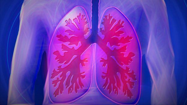 Proč je jedna plíce větší