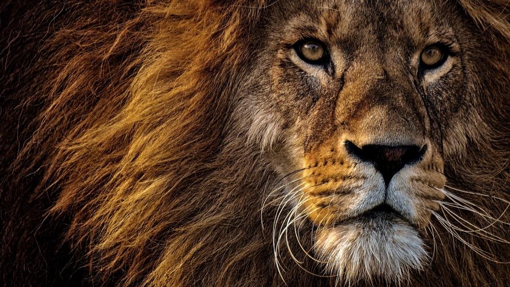 Proč je lev král zvířat | Dreamstime.com