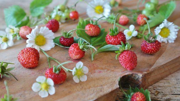 Samosběr jahod 2019: Přehled míst vČR, nejlevnější jahody nasbíráte za 38 Kč/kg