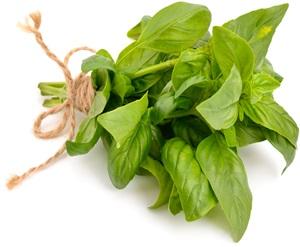 Bazalka pravá: Pěstování, účinky, použití