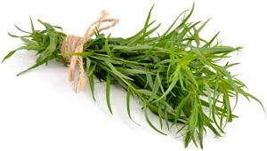 Estragon: Pěstování, účinky, použití